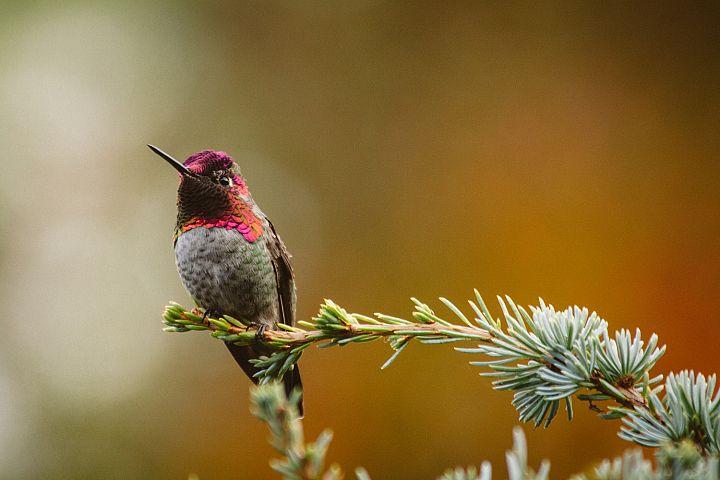 Hummingbird photo 2