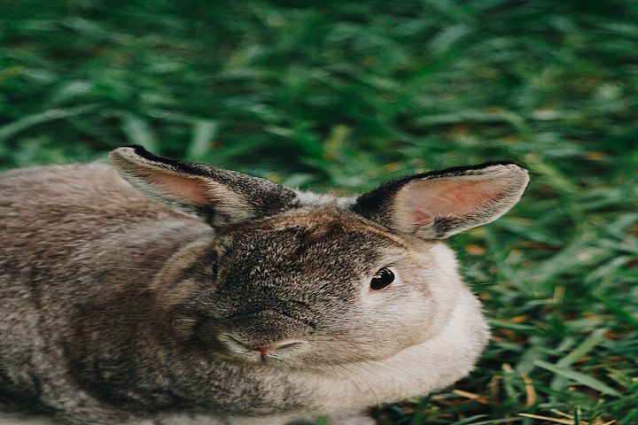 Bunny photo 25