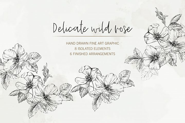 Hand Drawn Fine Art Graphic Images - Delicate wild rose.