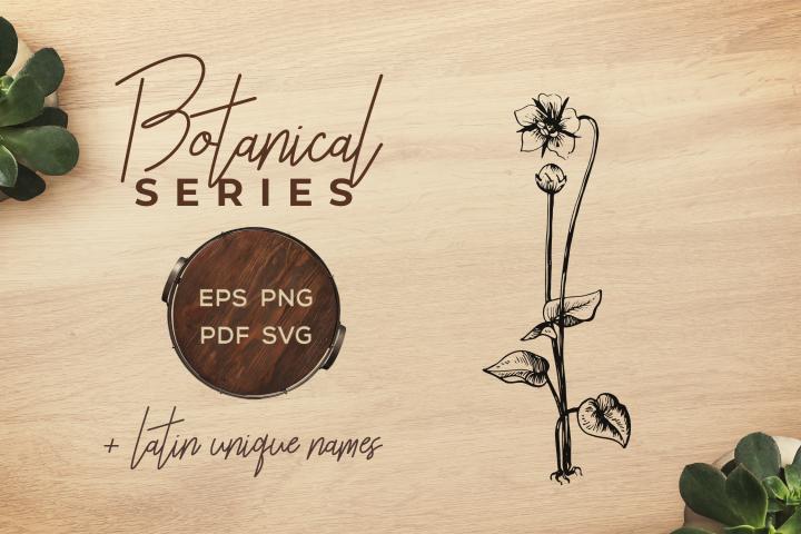 Botanical Vintage Flowers -Illustration Heal-all