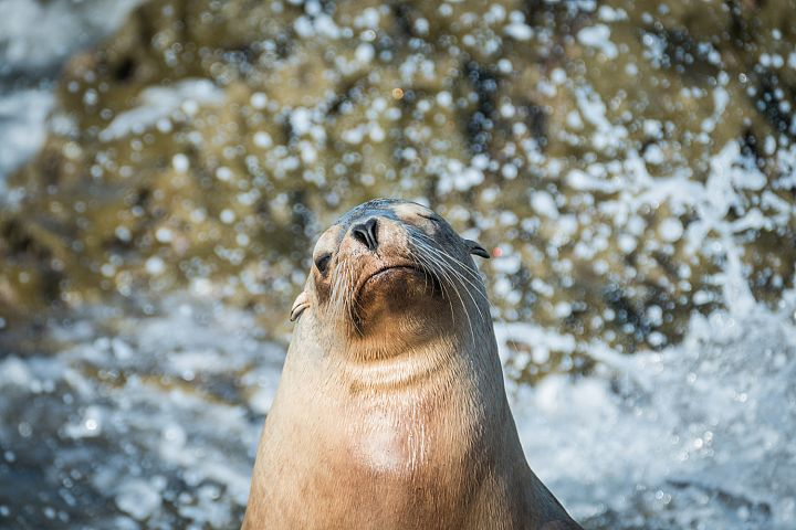 Seal photo 11