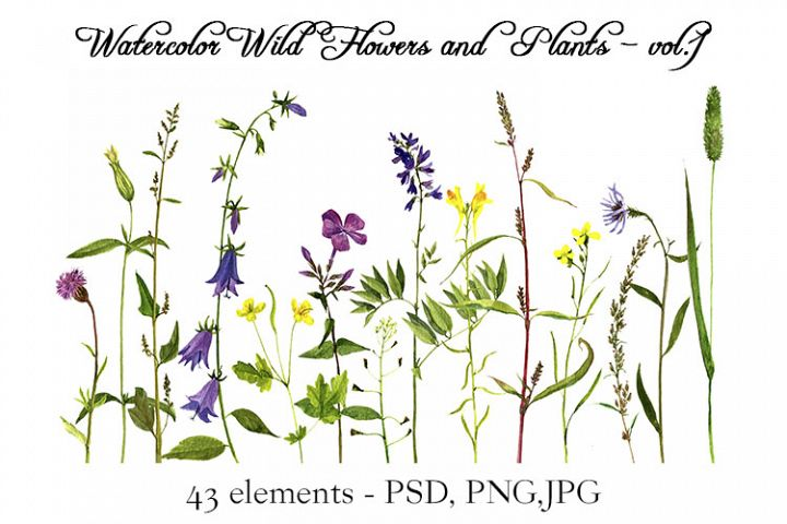 Watercolor Wild Flowers and Plants - vol.1