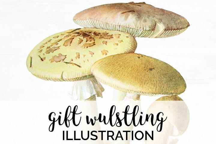 Mushroom Vintage Gift-Wulstling Mushroom