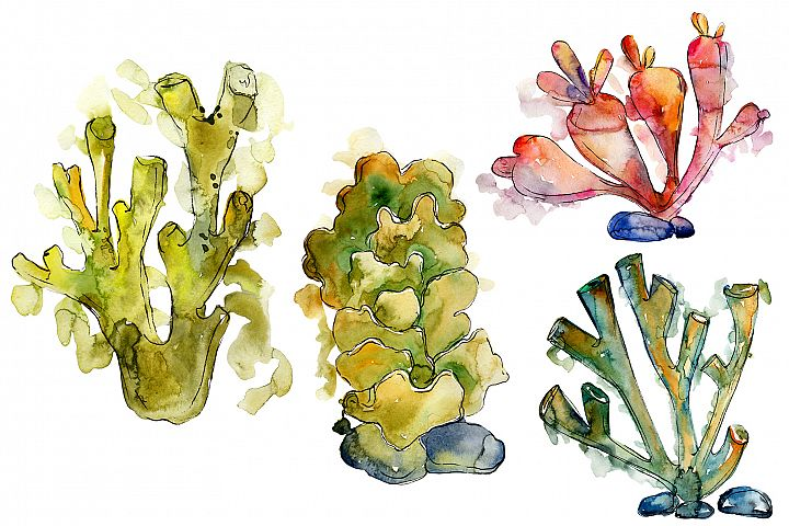 Corals Seafood Watercolor png