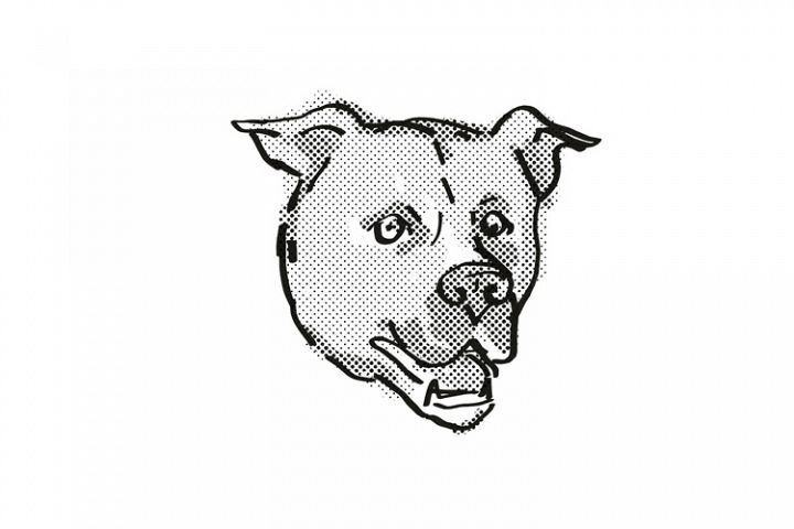 American Staffordshire Terrier Dog Breed Cartoon Retro Drawi