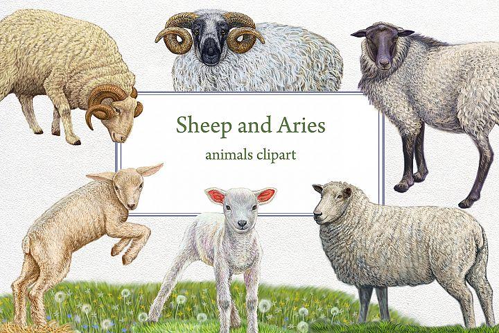 sheep and Aries animals farm clipart