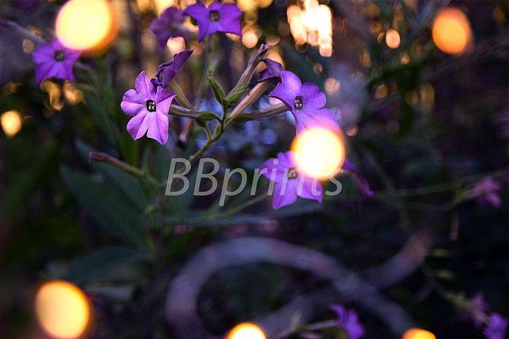 Nature photo, flower photo, floral photo, summer photo