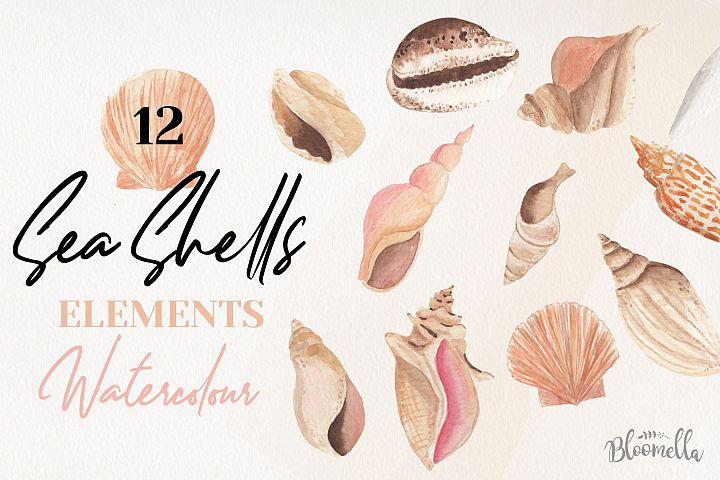 Sea Shells 12 Watercolor Elements Shore Painted PNG