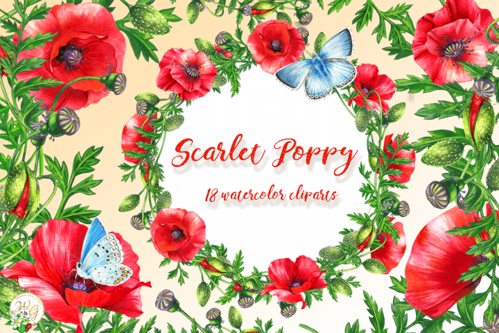 Scarlet Poppy set 18 watercolor handpainted clipart, floral,