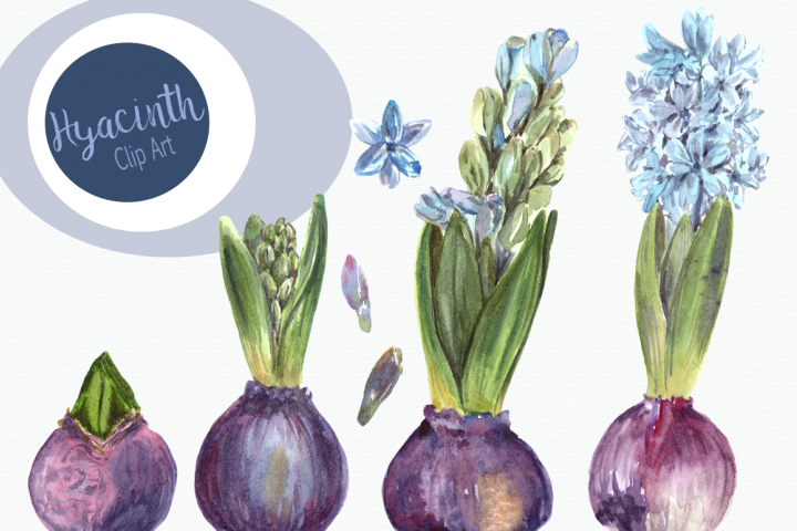 Watercolor Hyacinth Clip Art Set