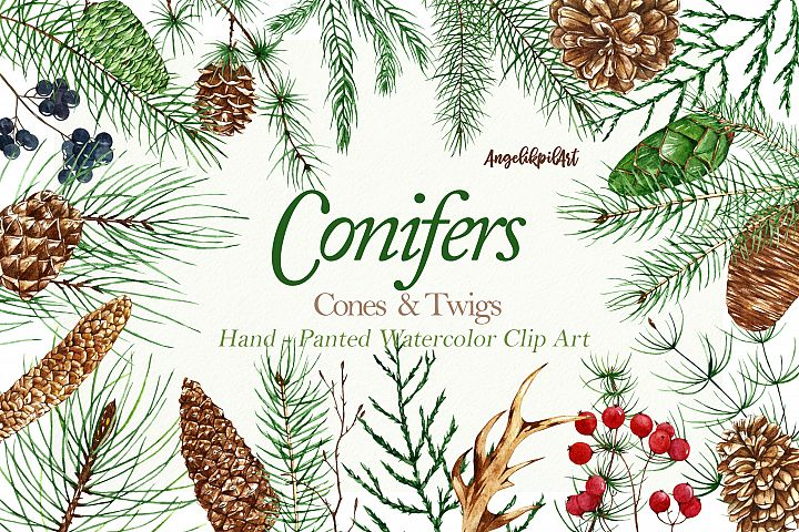 Conifers. Cones&Twigs watercolor