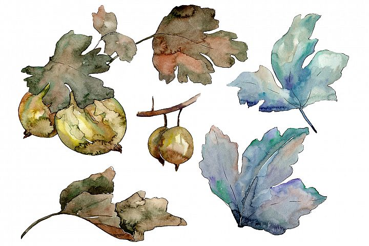 Gooseberry plant ordinary watercolor PNG