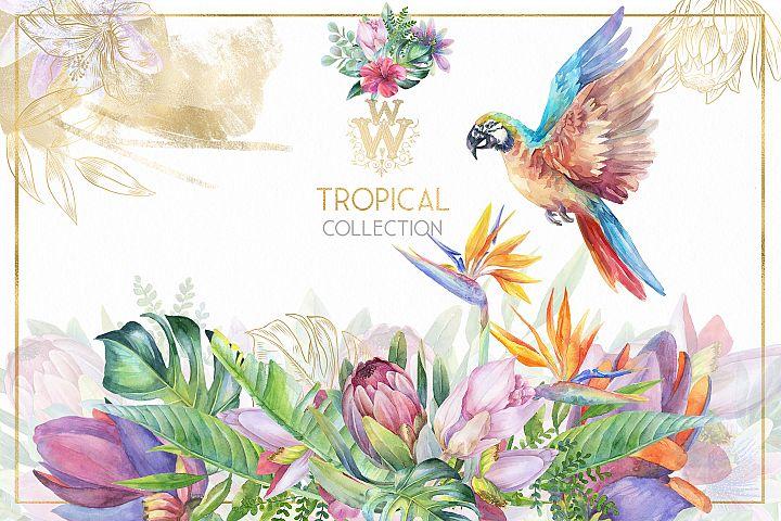 Watercolor tropical clip art, floral border clipart, exotic