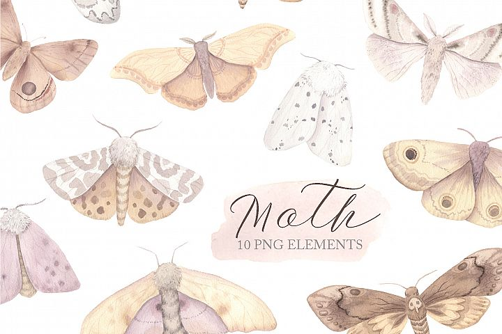 Watercolor Moth Clipart