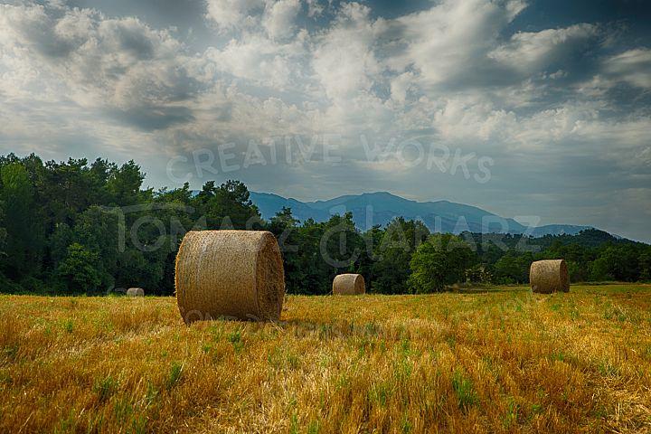 Harvest Field 5