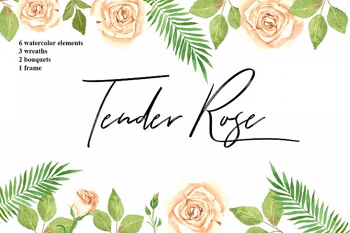 Tender Rose Watercolor Elements
