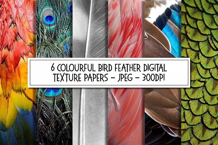 Colourful Birds Feathers Texture Images Bundle