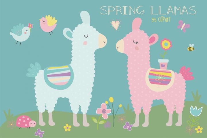 Spring llamas