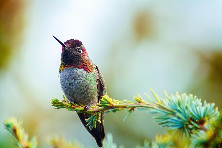 Hummingbird photo 11
