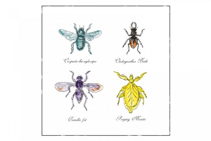 Carpenter Bee, Beetle, Oscinella Frit and Praying Mantis