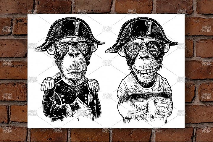 Monkey Napoleon dressed in the straitjacket Vintage engravin