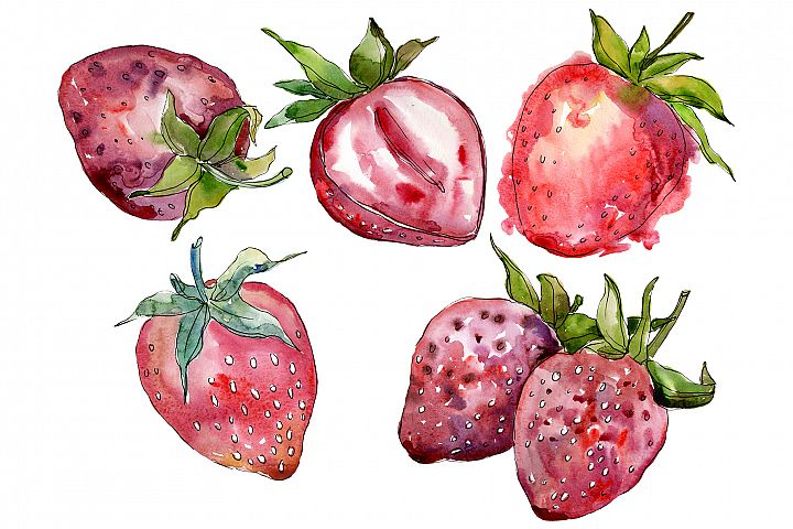 Strawberry cultivar Malvina watercolor png