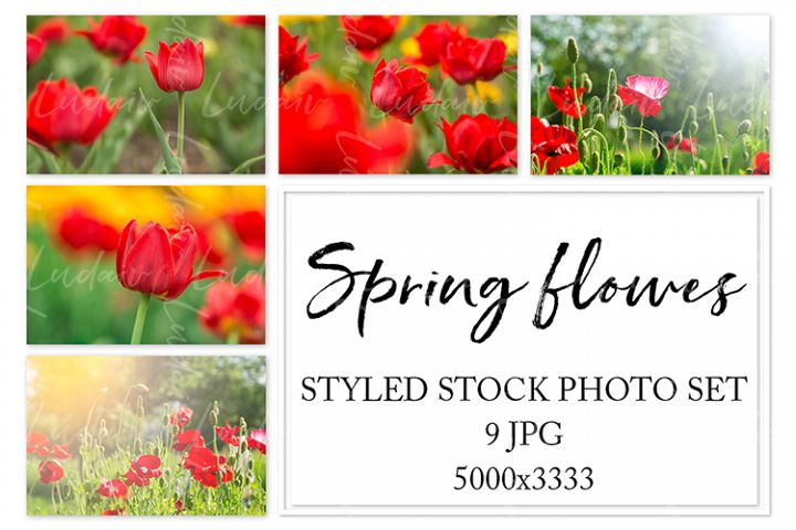 Spring flowers. Styled stock photo set.