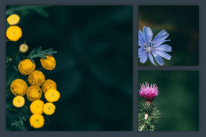 Instagram Photo Pack - Flora Vol. 1 example 2