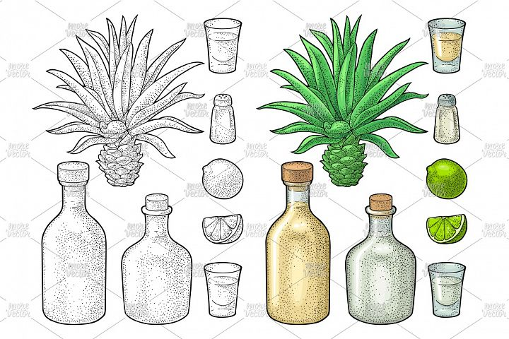 Glass and bottle tequila. Vintage color vector engraving