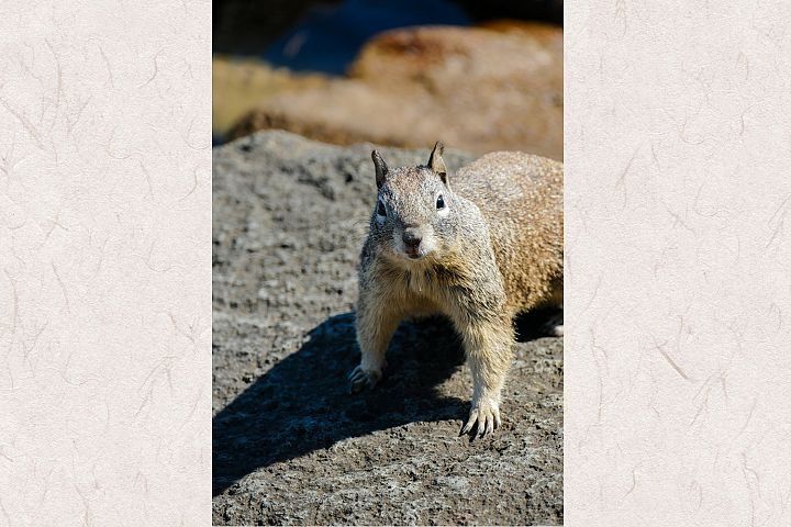 Squirrel photo 16