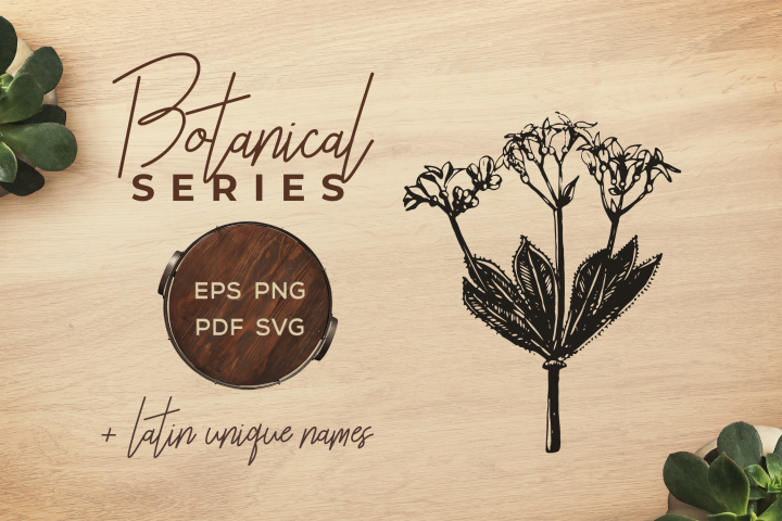 Botanical Vintage Flowers - Illustration Woodruff