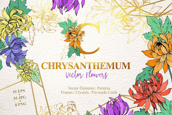 Chrysanthemum Vector Flowers
