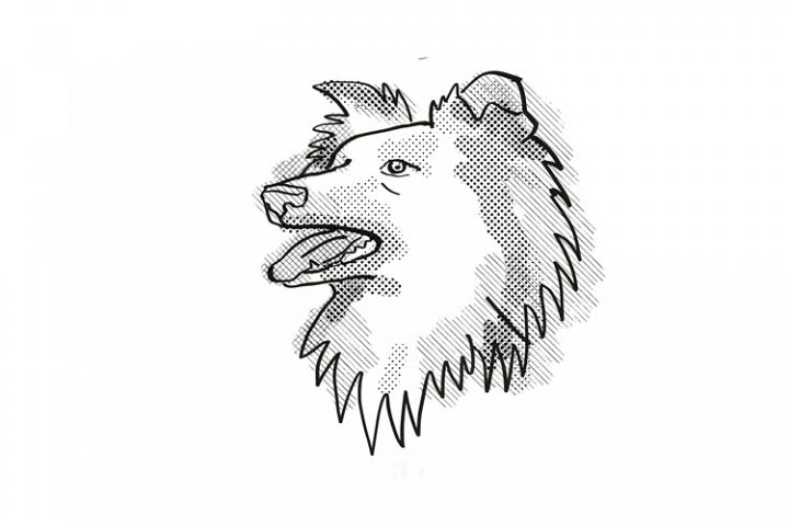 Shetland Sheepdog Dog Breed Cartoon Retro Drawing