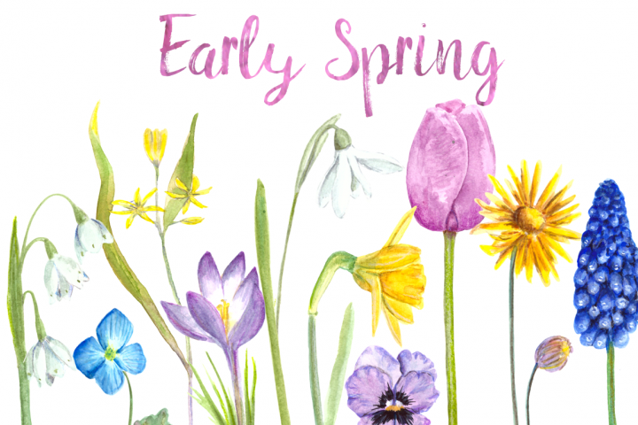 Watercolor Early Spring Flowers Clip Art Set