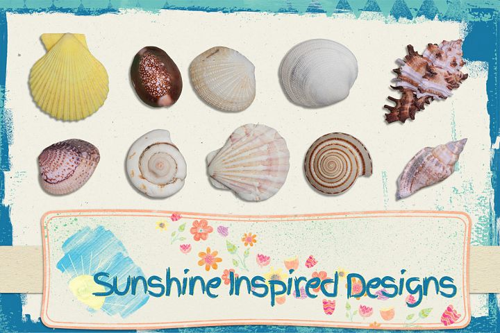 Sea Shells No.1 - Extractions