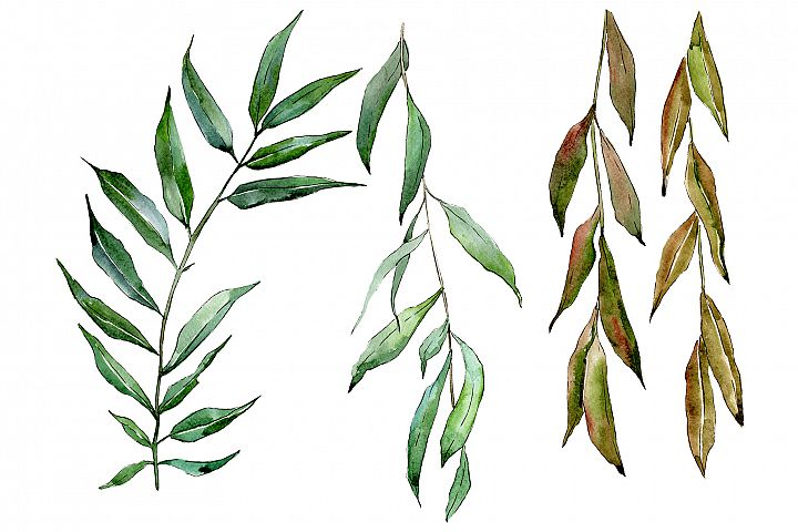 Willow branches Watercolor png