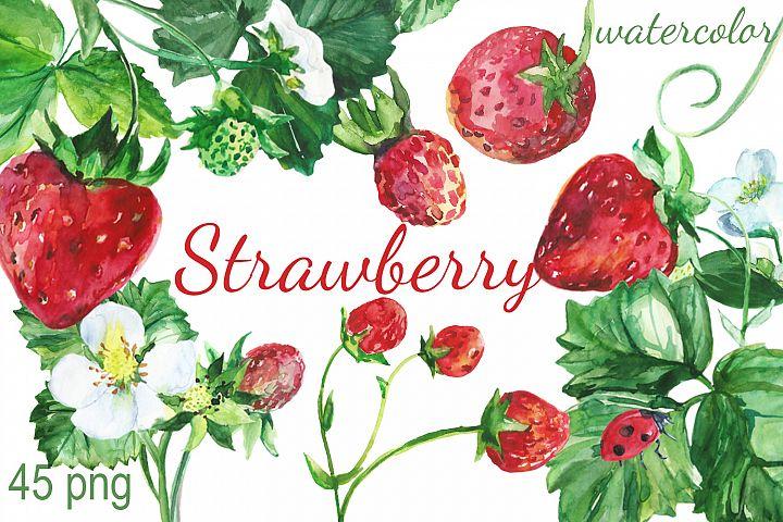 Watercolor Strawberry Clip art