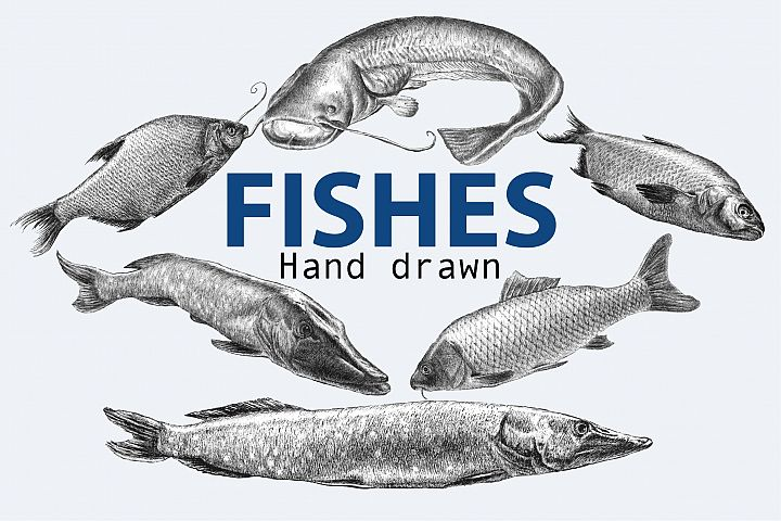 Fishes. Hand drawn.