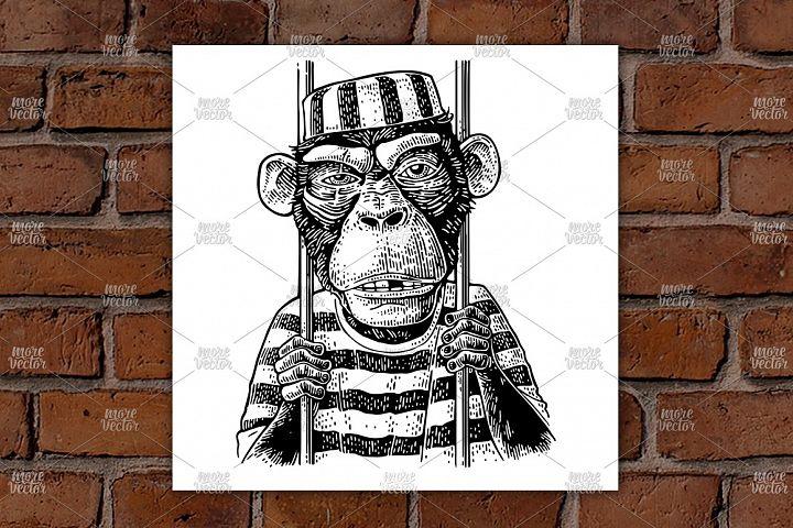 Arrested Monkey dressed prisoners robe Vintage engraving