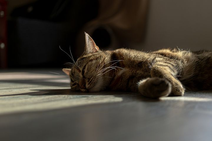 Cat laying in the sun