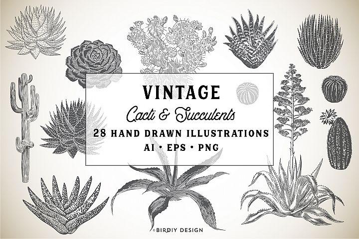 Hand Drawn Succulents & Cacti Set