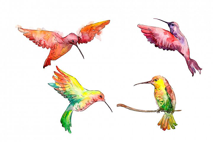 Hummingbird bird family watercolor png