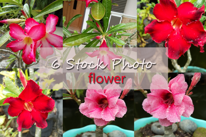 6 Stock Photo Beautiful Flowers
