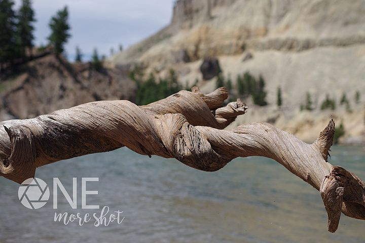 Yellowstone National Park River - Twisted Log - Wyoming