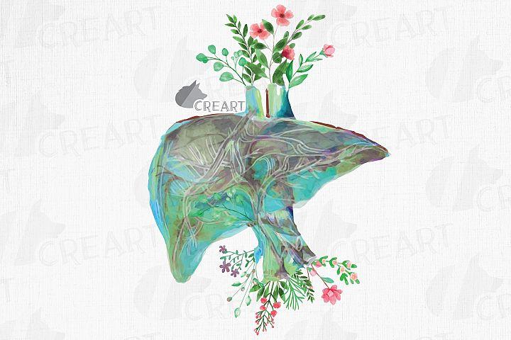 Floral anatomical liver decor design. Floral human liver png