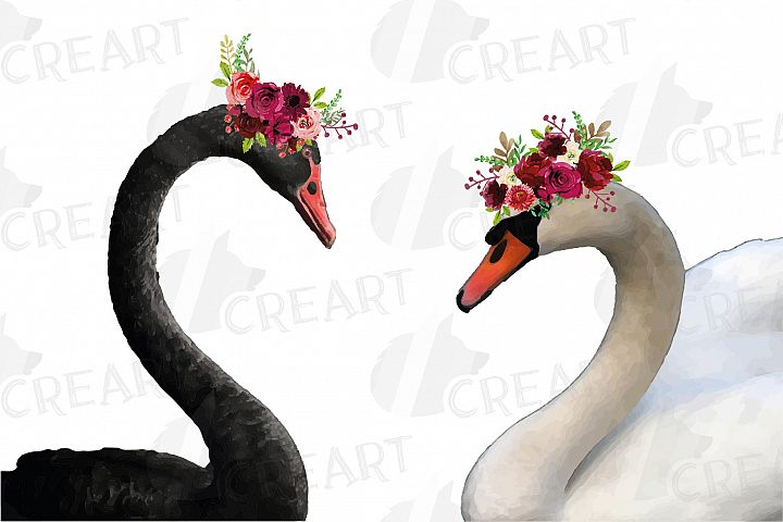 Black swan and white swan with burgundy floral crown graphic