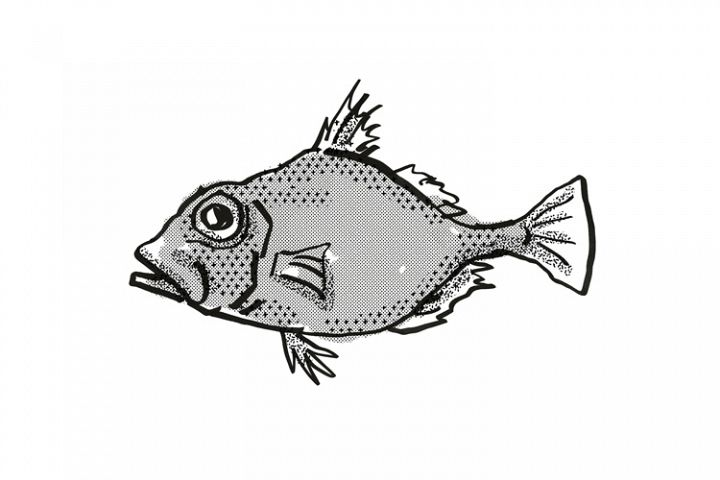 False Dory Australian Fish Cartoon Retro Drawing