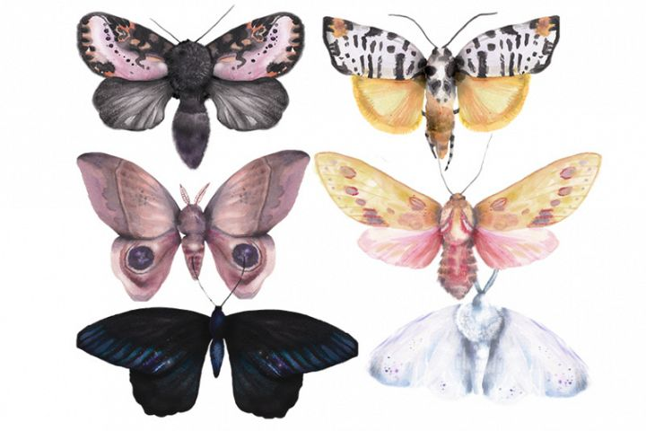 6 beautiful unique vintage watercolor moths and butterflies