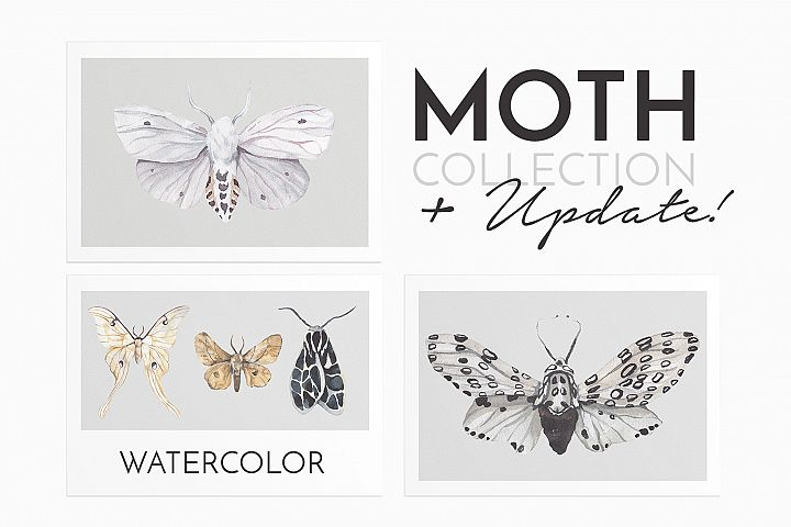 MOTH watercolor collection