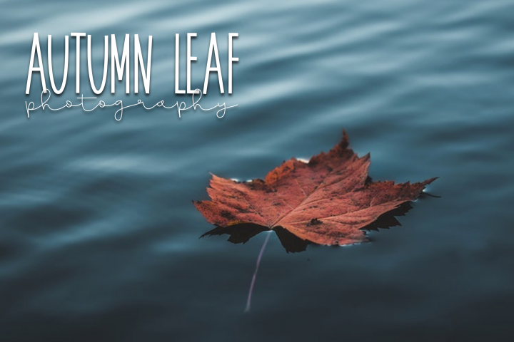 November - A Tall Handwritten Font - Free Font of The Week Design6